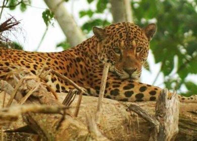 Ocho motivos para visitar la Amazonía