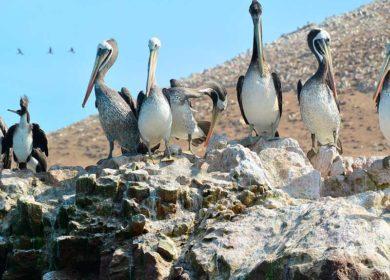 Tour de 7 días y 6 noches en Perú los enigmas de Machu Picchu y Nazca